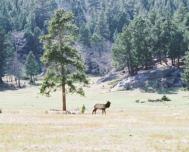 Elk unedited