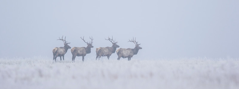 Four in the Fog