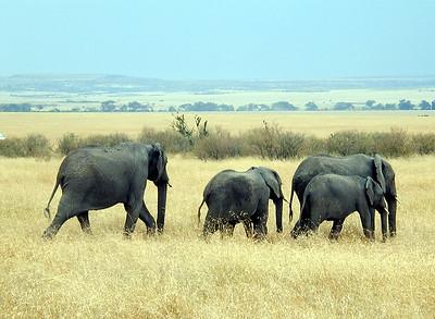 Masai Mara 1999-08-04