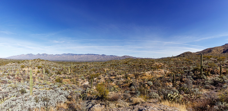 Wide Angle View of Saguaro National Park East