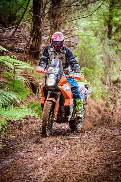 2018 KTM New Zealand Adventure Rallye - Northland (764).jpg