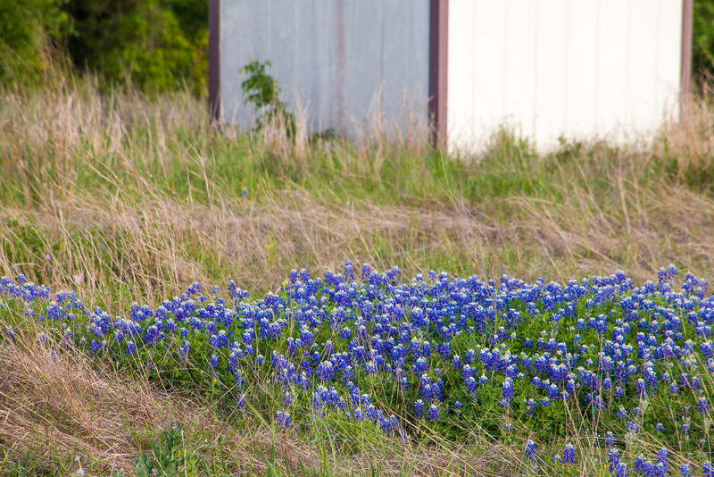 2016_4_9 Texas Wildflower Shoot-8959.jpg