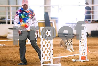 2/25/17 USDA Dog Agility Trials by Don Spivey & Chelsea Purgahn