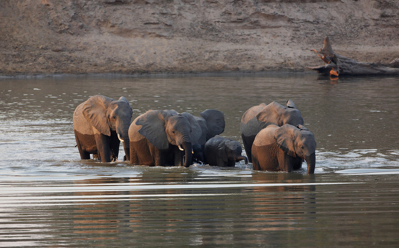 Elephant - 1338.jpg