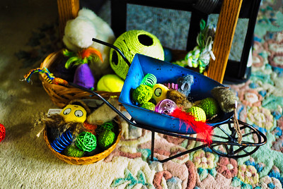 Cats - Their Toys and Environs