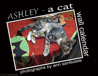 Ashley - A Cat