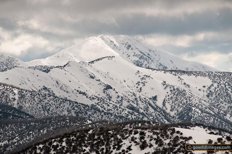 Looking across The Razorback to Mt Feathertop