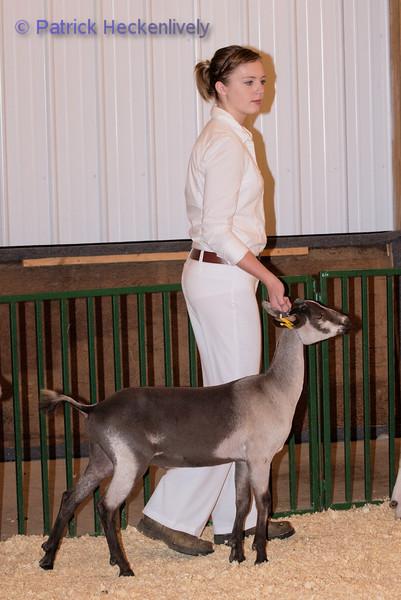 2010-09-27 Goats