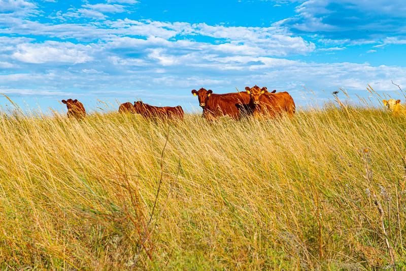Horn Ranch-1344.jpg