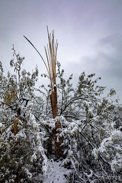 Saguaro East Snow 1-2-2019a 1-2-2019b-.jpg