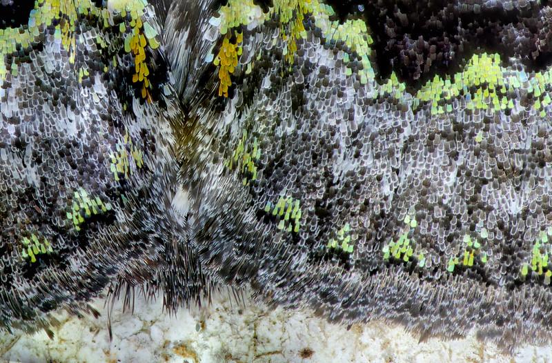 Moth crops