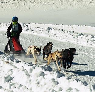 Laconia  Sled Dog Races---2015