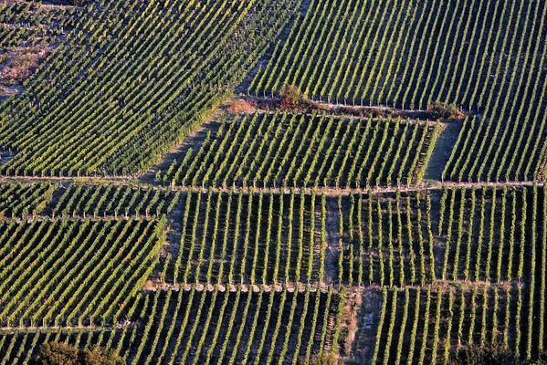 Pieds de vignes du Sancerrois