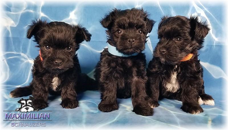 Annie Pups 010.jpg