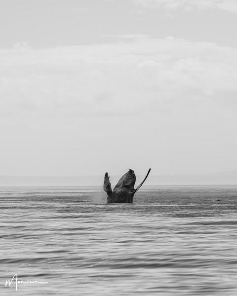 2019-08-31 - Whale Watching-0628_edit.jpg