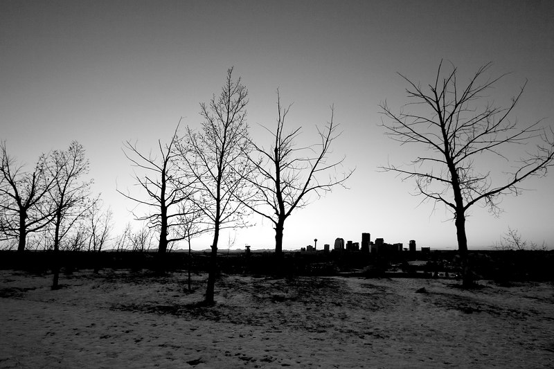 CalgaryThruTrees.jpg