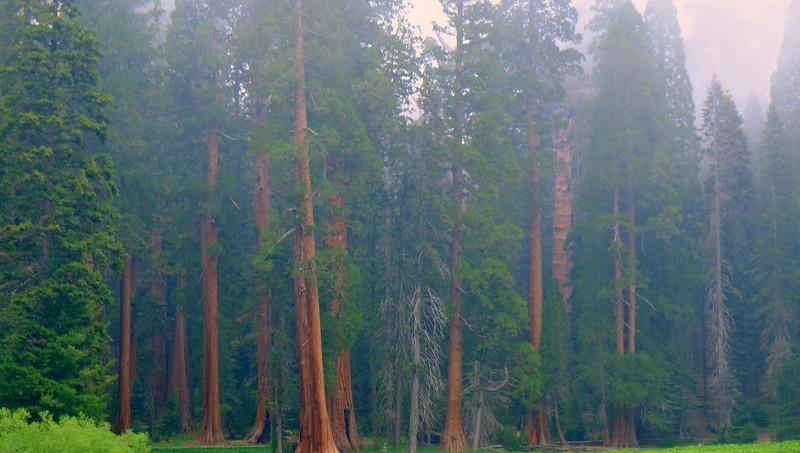California Day 6 Sequoia 05-30-2017 94.JPG