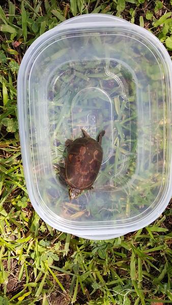 2015 July 11 Turtle Release