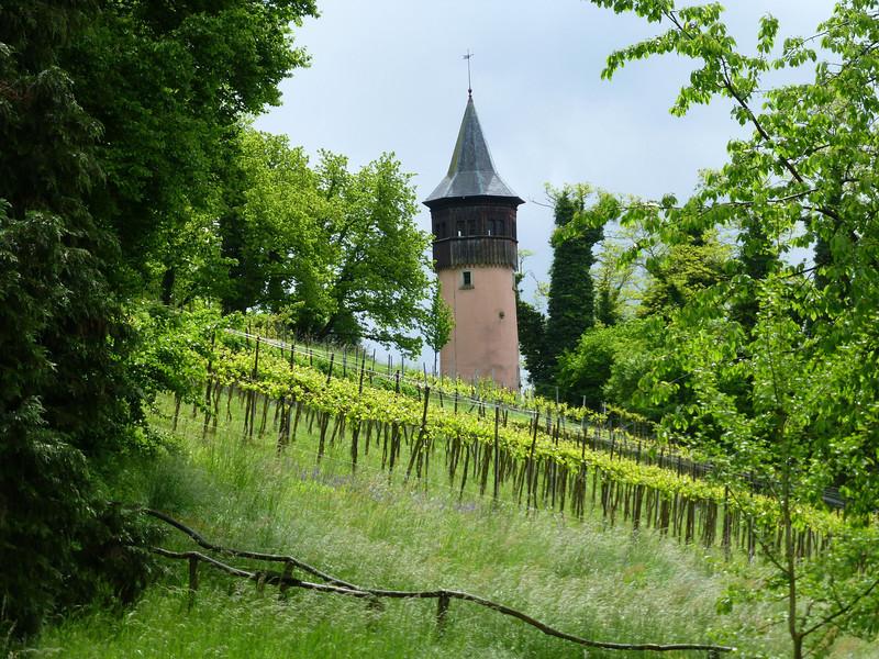 Day7-Mainau vinyard.jpg