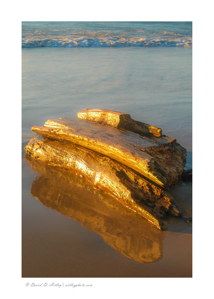 Driftwood, The Pinery Provincial Park, Ontario, Canada