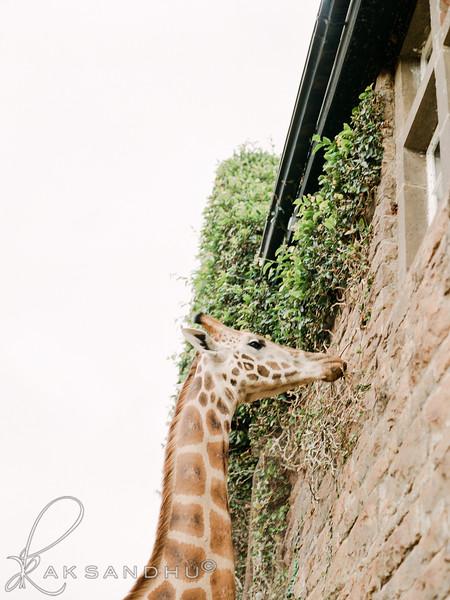 Safari-Africans-158.jpg
