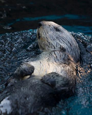 08-04-2008 - Oregon Zoo