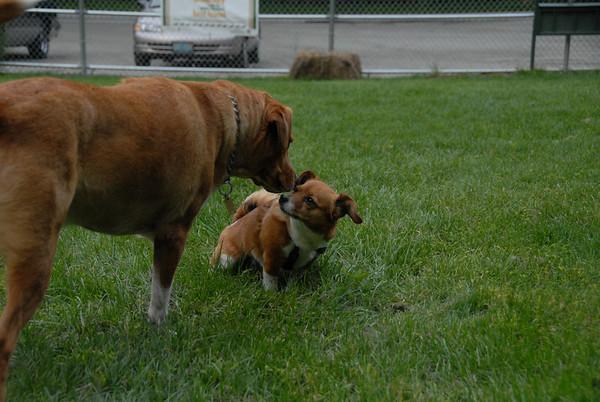 2011-06-17 Central Dog Park