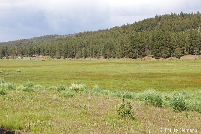 Meadow along Ochoco Creek