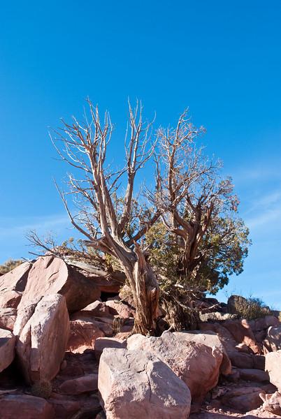 Grand Canyon-0191