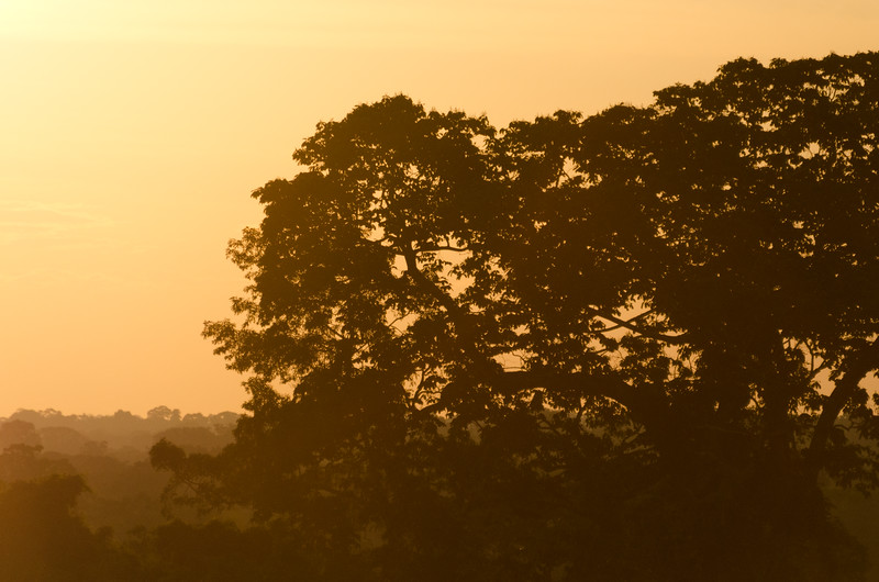 Silhouette of trees at dusk - Peru