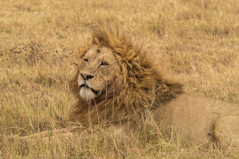 Tanzania_Safari-best-59.jpg