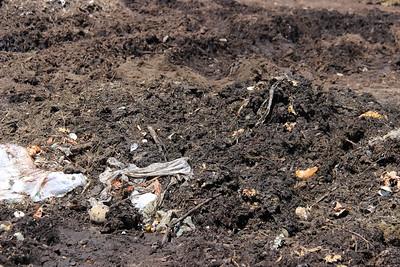 Composting Field Trip