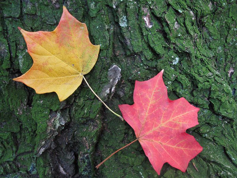 oct11_fall.jpg