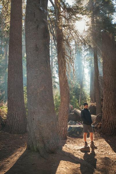 20140825_sequoia_0086.jpg