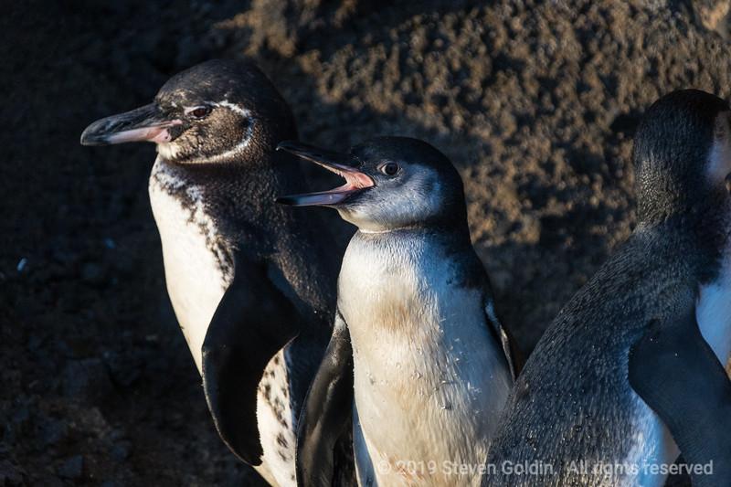 Galapagos 0719 SJGoldin-792.jpg