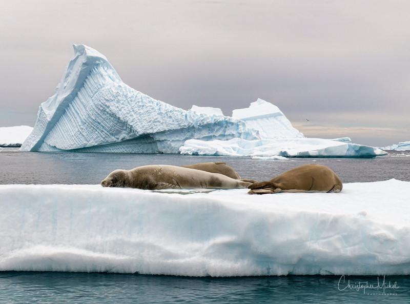 icebergs pleneau island_d3x_20130106_8739.jpg