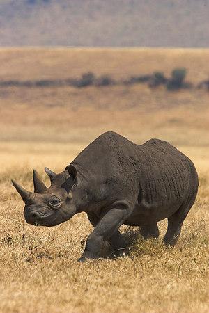 2006 E. Africa Safari - Day 12 (Ngorongoro Crater)