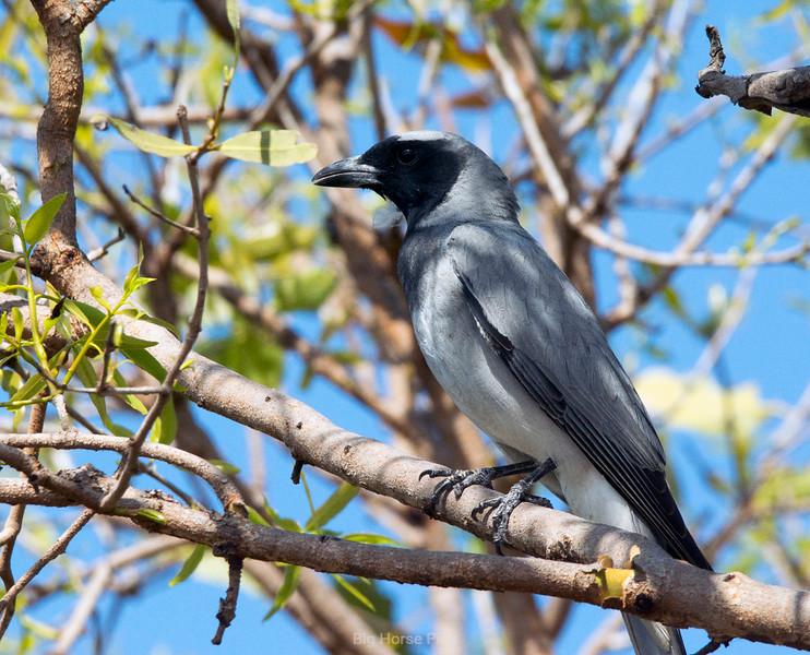 roebuck bay bird 18..jpg