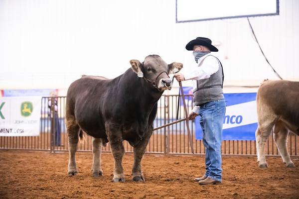 Braunvieh Bull Ringshots