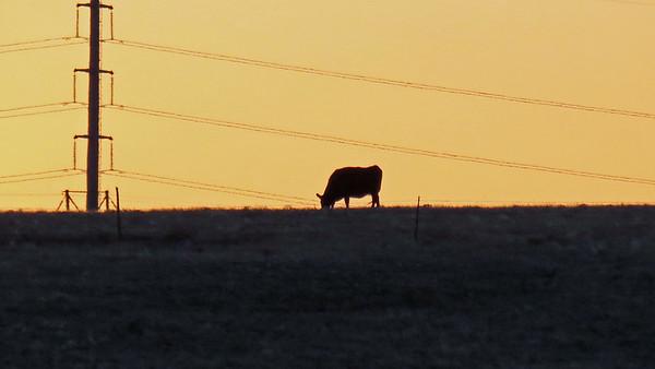 November 24:  Cheyenne & Laramie, WY .  .  .
