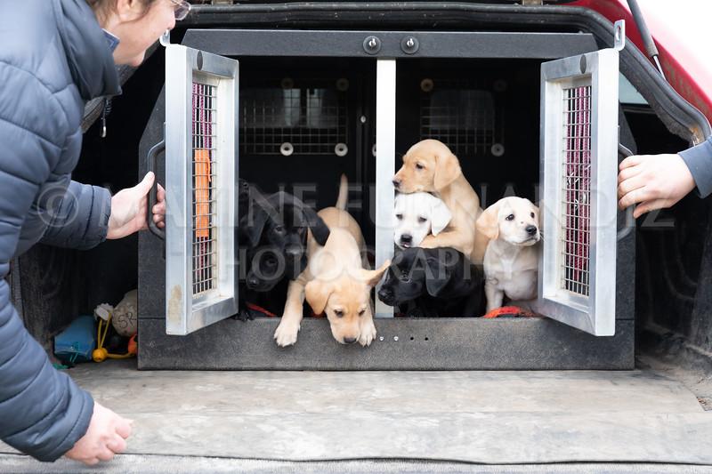 Weika Puppies 24 March 2019-8754.jpg