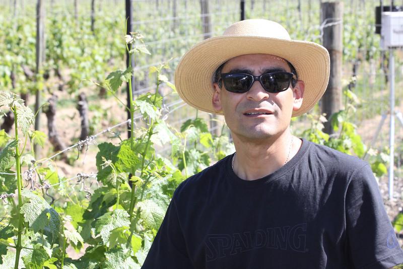 Neyen vineyards at Vina Neyen de Apalta