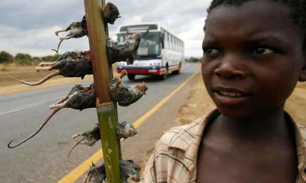 . A boy displays boiled rats for sale on the main highway in Malawi\'s capital Lilongwe June 20, 2009.  REUTERS/Thomas Mukoya