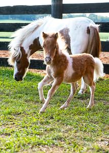 Beaties Mini Foal