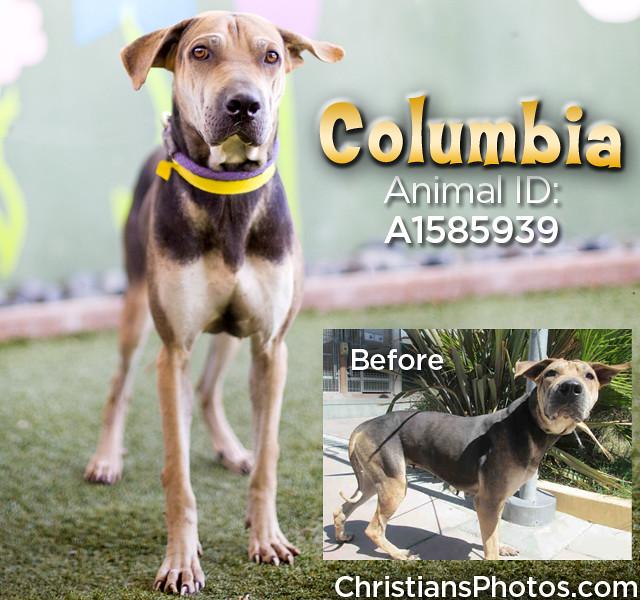 Columbia_BA.jpg
