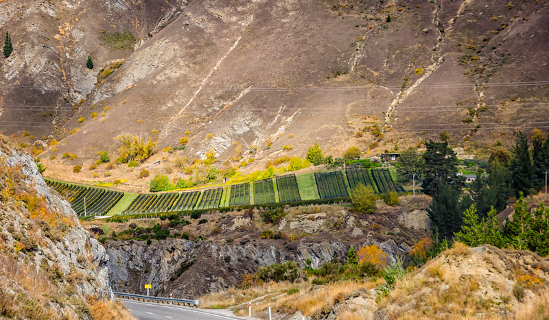 Vineyards Kawarau gorge