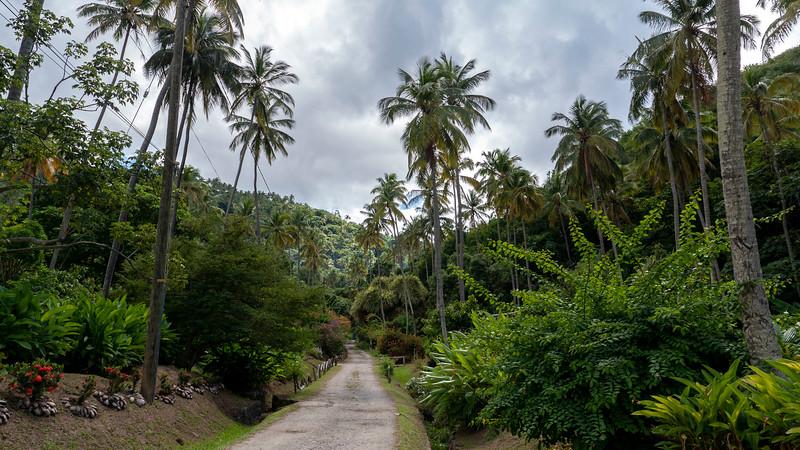 Saint-Lucia-Island-Routes-Catamaran-Tour-19.jpg