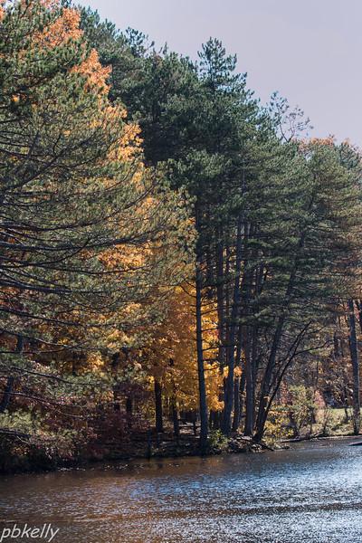 Fall Foliage N Chagrin 110313-1.jpg