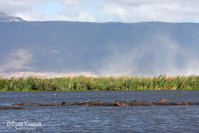Hippos gather with Ngorogoro Crater in the background
