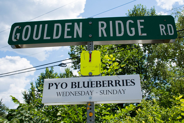 Blueberry Picking at Goulden Ridge Farm